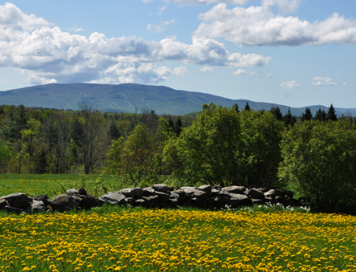 Vermont in Summertime!